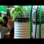 Vertical Gardening Concepts – Develop Your Indoor Garden Do-it-yourself Venture with applying Plastic Bottles