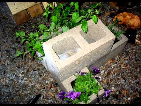 Having Innovative With Cinder Block Gardening – Cinder Block Garden Thoughts