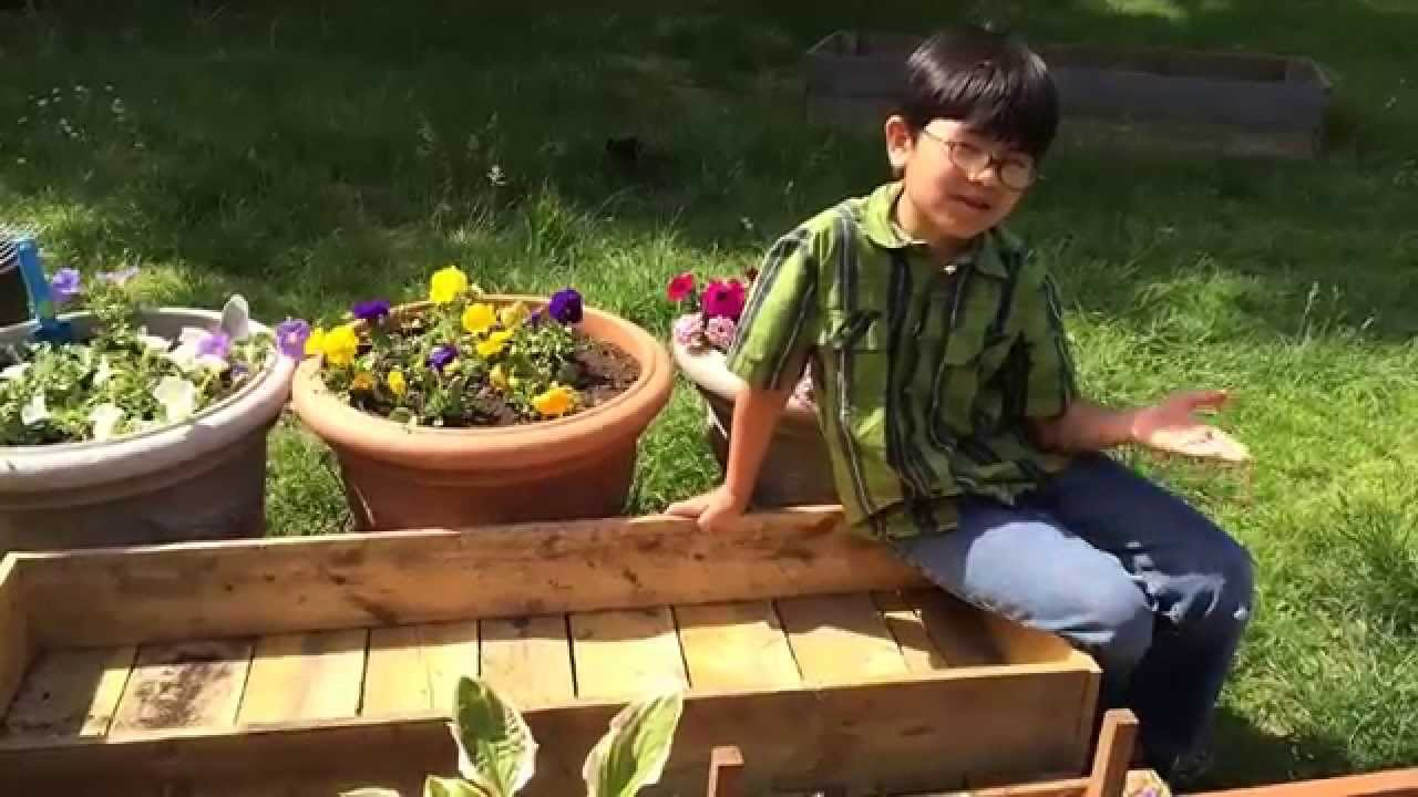 How To Create Garden Box For Below $ten (Portion 1): Gardening Ideas Do it yourself Made Basic By Aiman