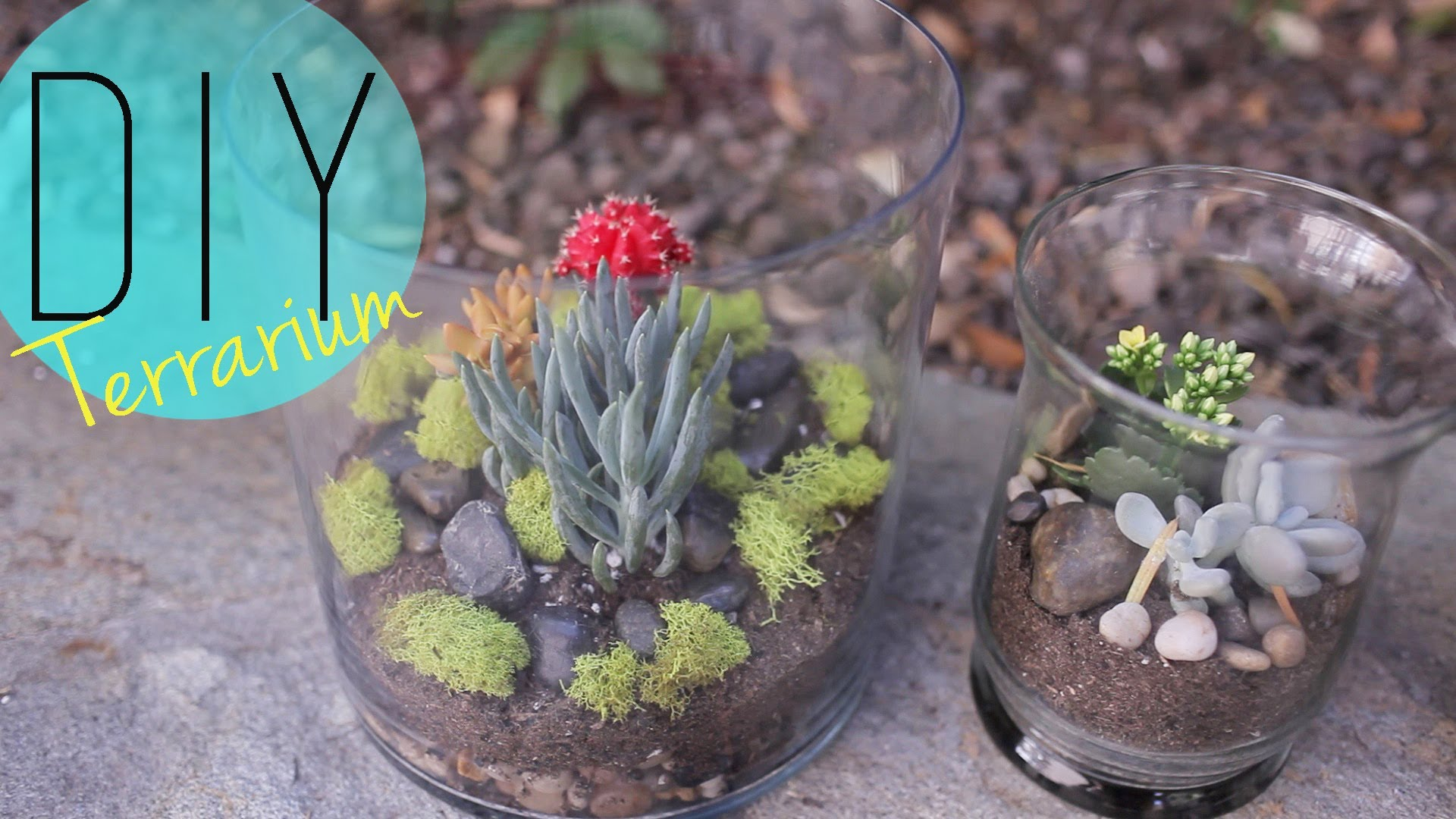 Do-it-yourself Indoor Back garden – Cactus Terrarium How to by ANNEORSHINE