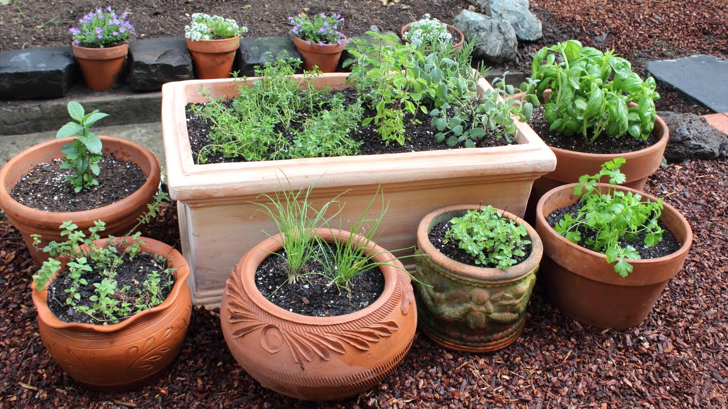 How to Plant a Culinary Herb Garden! DIY Kitchen Garden