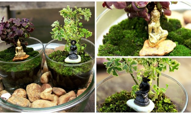 Terrarium With Bhuddha -DIY | Garden Decor.
