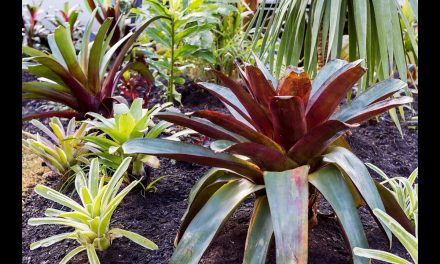 Cheap and Easy DIY Designer Landscaping