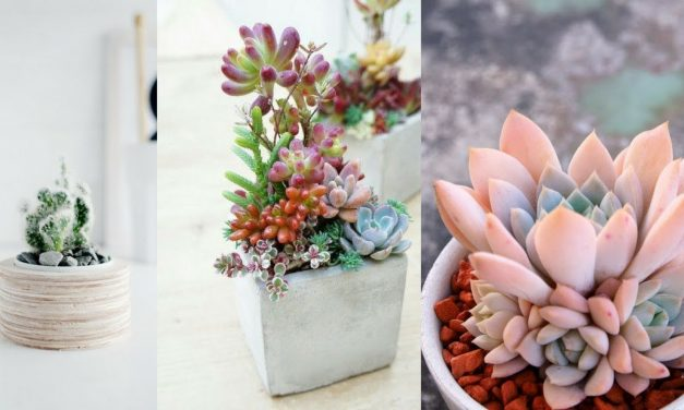 25+ Best DIY Mini Succulent Planters Ideas