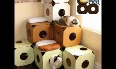 Easy DIY cat house projects ideas