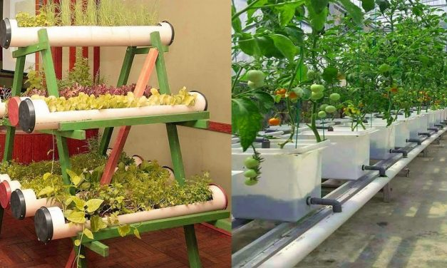 Small Space Vertical Vegetable Gardens Ideas-Unique Vertical Gardening