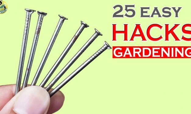 25 MIND BLOWING GARDEN HACKS: Gardening Ideas and Tips – 2018
