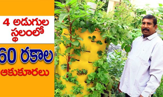Balcony Gardening || How to grow more vegetables in a small space
