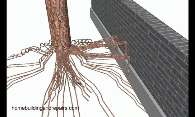 Tree Roots Can Move Small Retaining Walls – Landscaping Design Tips